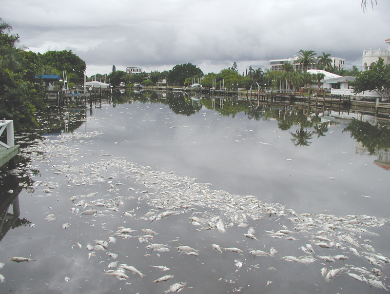 Effects of Red Tide, Fish Kills