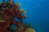 Repopulating Coral Reefs