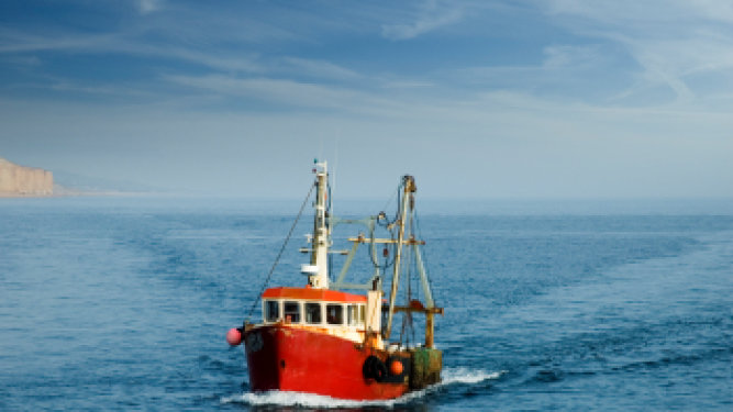 U.S. Government Takes Measures to Make Seafood Harvesting More Sustainable