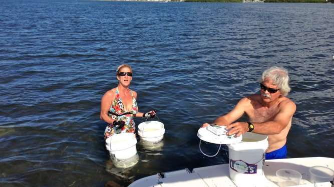 Sarasota Bay Watch Releases 5 Million Scallop Larvae