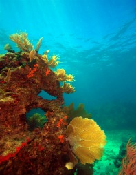 underwater reefscape in the florida keys