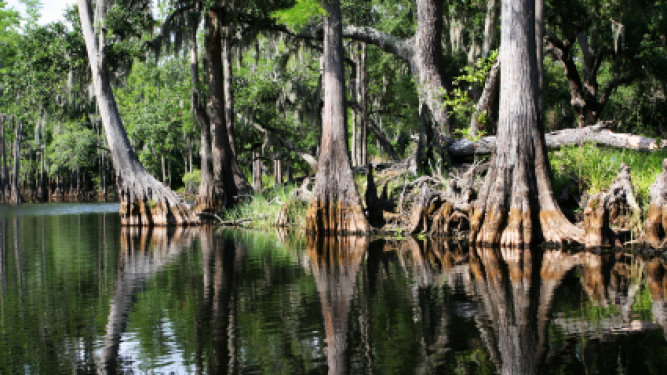 Legislation on Florida Water Policy in the Works
