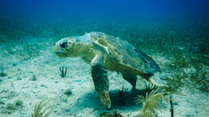 Sea Turtle Nesting Lasts Through October