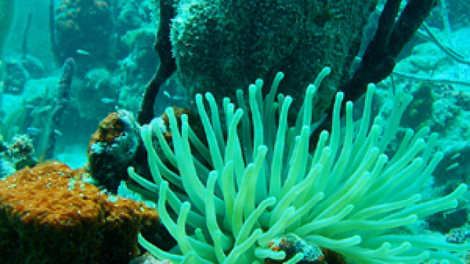 A Sea Sponge Could Save Your Life