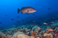Marine Conservation Brings U.S. and Cuba Together