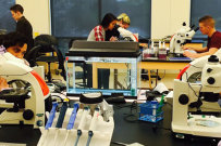 Eckerd students push limits on aquatic toxicity research