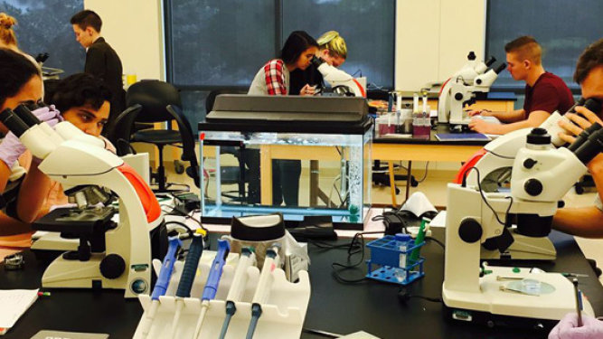 Eckerd students push limits on aquatic toxicity research