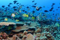 Largest Marine Reserve Created off Hawaii
