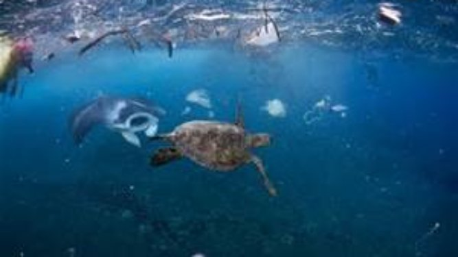 Progress on Plastics in our Oceans Being Made One State at a Time