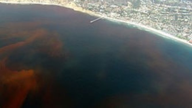 Funds to Battle Red Tide May be on the Way