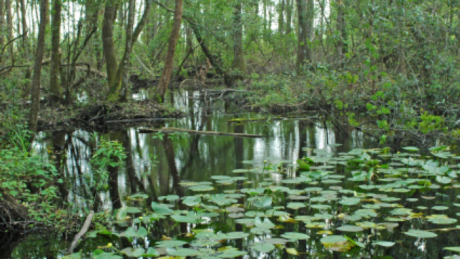 Gov. Scott Proposes Funds for Everglade and Natural Springs Restoration