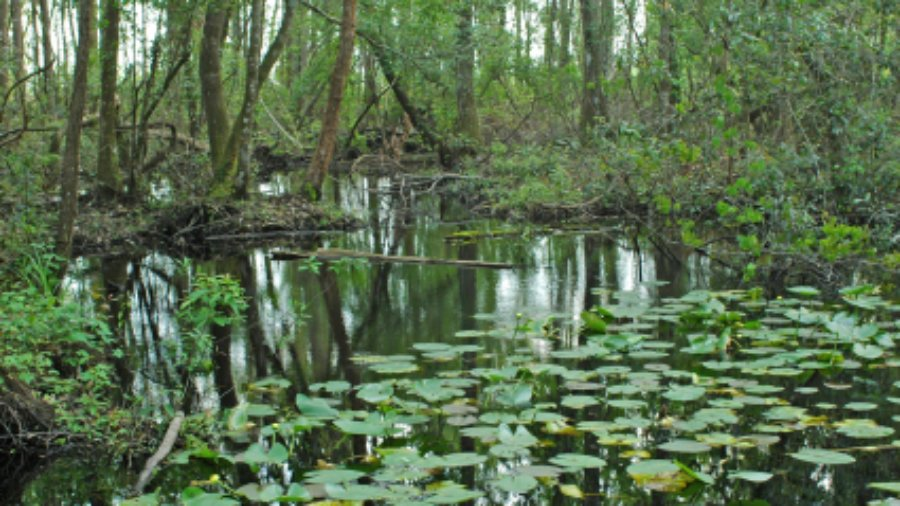 State Water Officials Set High Price Tag to Fix Florida Springs