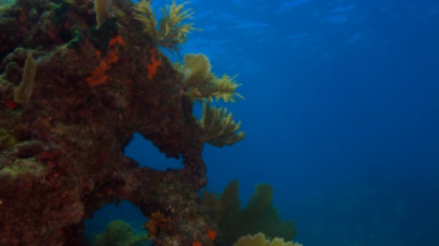 Good News for Coral Reefs