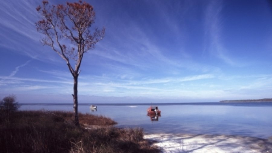 Oyster population drastically declined in Apalachicola Bay