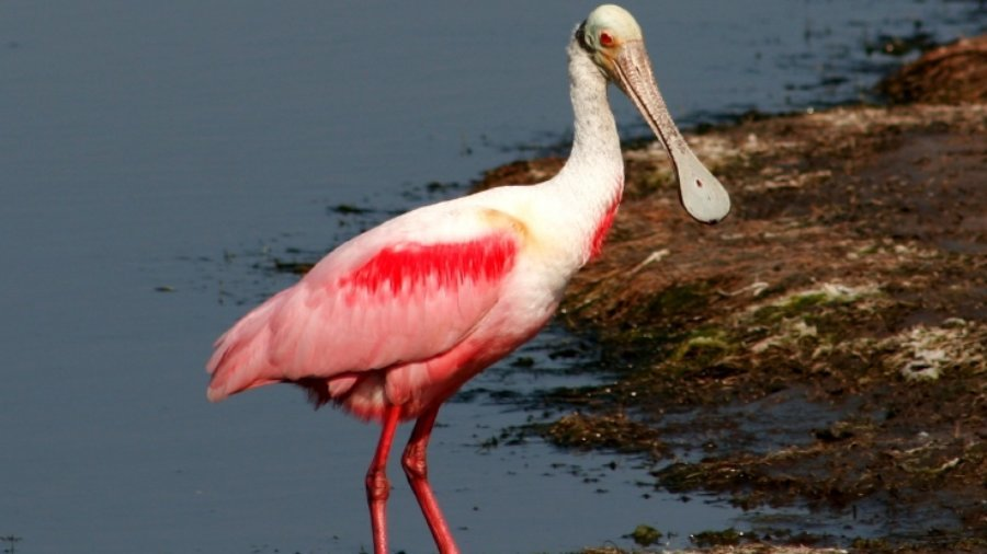 Indian River Lagoon Restoration Project