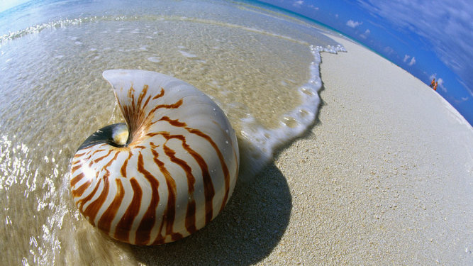 Image result for a single seashell photo