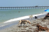 Red Tide & Your Pets