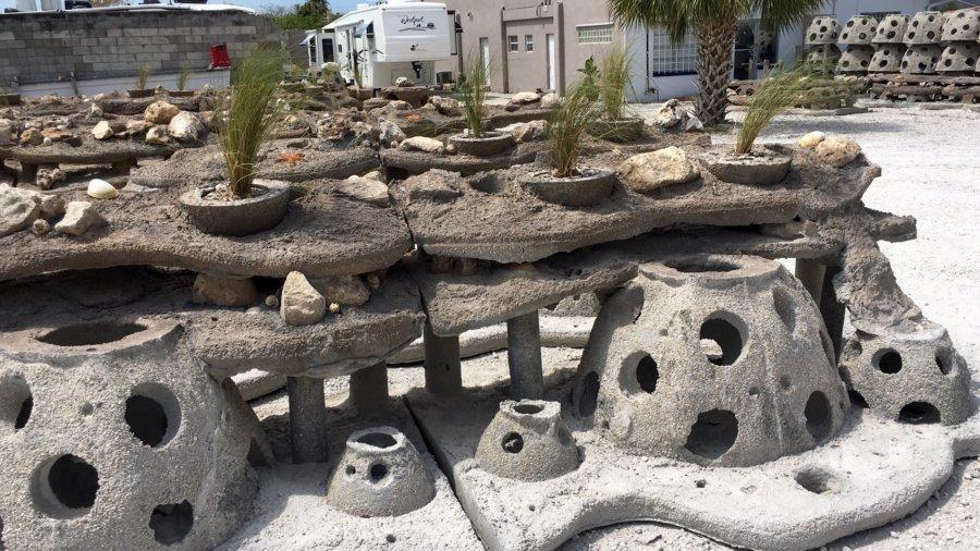 Living Seawalls Enhance Shorelines