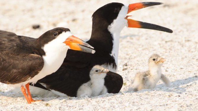 Audubon and the Florida Fish and Wildlife Conservation Commission Unite for Waterbirds