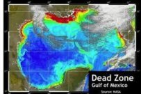 Third Largest Dead Zone Ever Predicted for Gulf of Mexico