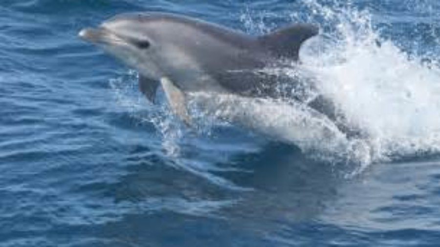 Baby Dolphins Have a Good Year in Sarasota Waters