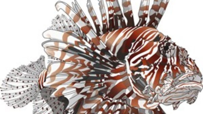 FWC Gives Update on Management of Lionfish