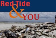 Lean More About Red Tide and How to help Control it