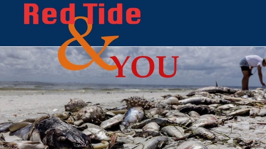 Red Tide & You