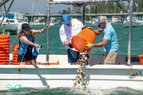 Clam Seeding Completed At Bradenton Beach