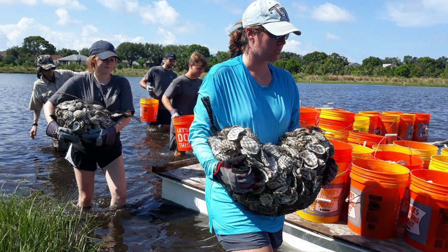 Oyster shell recycling to build reefs
