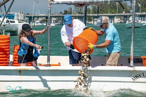 Volunteers clam seeding from a boat