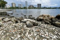 Amendment Passes to Study Impact of Red Tide on Human Health