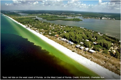 Red tide bloom coming ashore