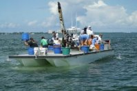 New Clam Seeding Season in Sarasota Bay