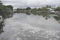 Suncoast Suffers from Red Tide